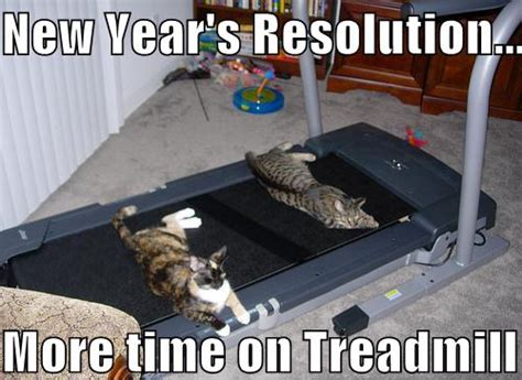 New Years Resolution Meme - animal memes funny memes