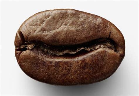 Range Coffee Bean best range of coffee gear on the planet