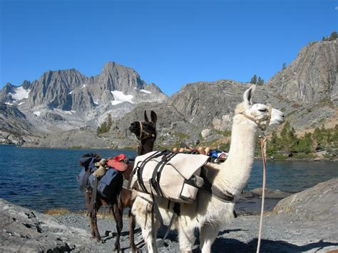 lua the llama and the mountain of books explore the with the help of llama packers