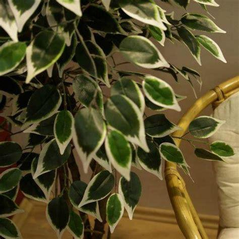 piante artificiali da interno piante finte artificiali da arredo interno ficus benjamin