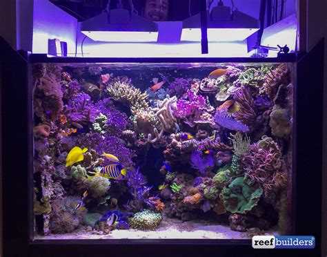 led reef lighting reviews lighting ideas
