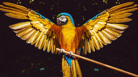parrot  wallpapers hd wallpapers id