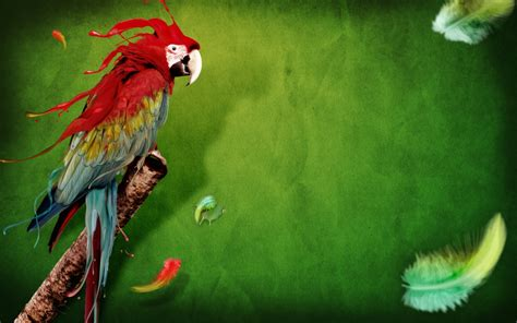 Parrot feathers Backgrounds for Presentation   PPT