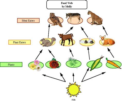 what does a food web diagram illustrate what is a food web 5396092 meritnation