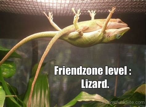 Lizard Meme - funny animal pictures