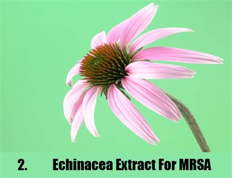 Detox Cleanse Staph Infection by 7 Cures For Mrsa How To Cure Methicillin