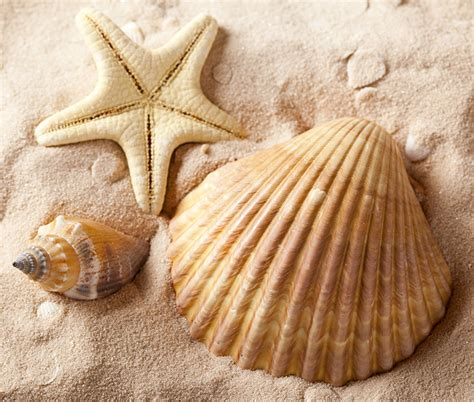 image starfish sand shells closeup