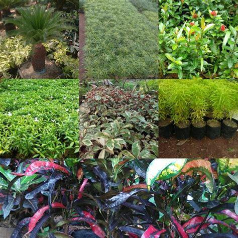jual tanaman hias gardening  carousell