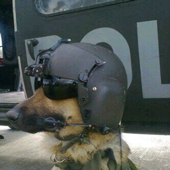 pilot dogs helicopter pilots pilots and dogs on