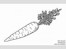 Zanahoria dibujo : Dibujos Eu