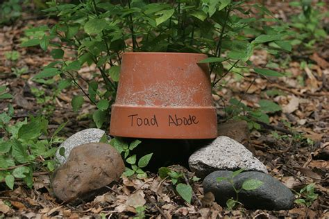 diy toad abode houston arboretum nature center houston