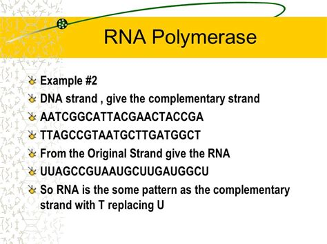 when an rna strand forms using dna as a template rna structure date 1 9 06 day a objectives identify the
