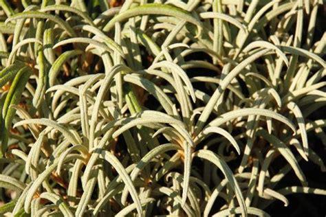 garten 86 bremen rhododendron stiftung bremer rhododendronpark