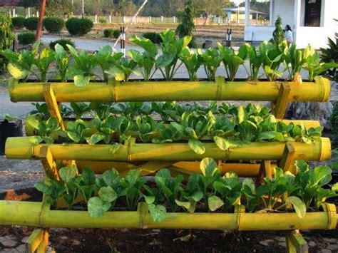 membuat hidroponik dari bambu teknologi reproduksi pada tumbuhan rezki napitupulu