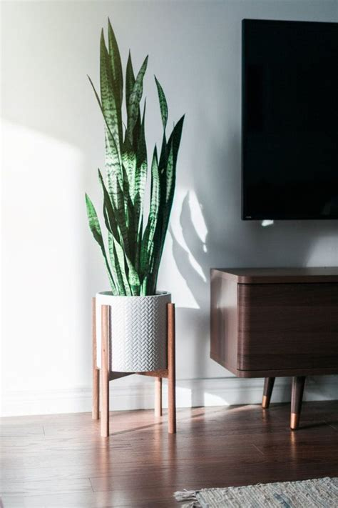 modern plants indoor 25 best ideas about indoor plant stands on pinterest