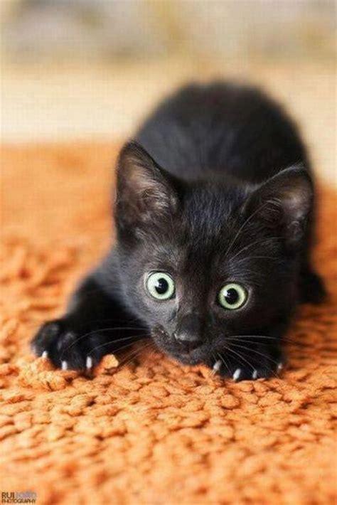 cute black cats  green eyes pattazhy