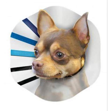 e collars for dogs kong pet e collar products gregrobert