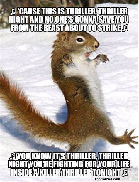 Funny Squirrel Memes - thriller squirrel funny animals meme pic best humor