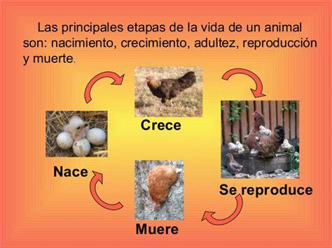 did 224 ctica de ciencias naturales los animales y su peligro el ciclo de vida de un animal de un mamifero los animales