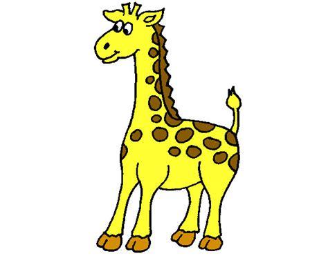 imagenes de jirafas para ninos image gallery jirafa dibujo