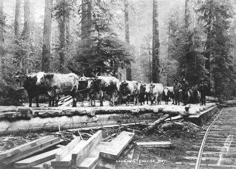 scfc history of forest industry logging bay city of vancouver archives