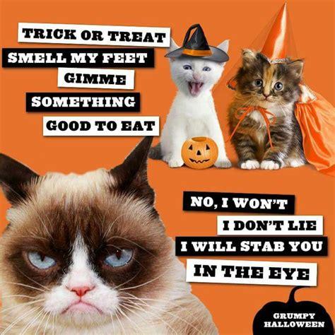 Halloween Cat Meme - 1000 ideas about grumpy cat on pinterest grumpy cat