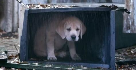 the puppy who lost his way this puppy is lost and can t find his way home then when all was almost lost