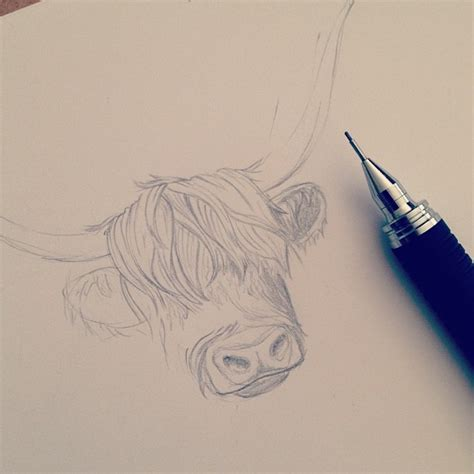 highland tattoo best 25 cow ideas on cow icon cow