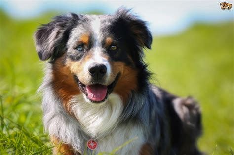 family dogs traits to look for in a family pets4homes