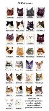 top unusual cat breeds on earth persian cat breeds and