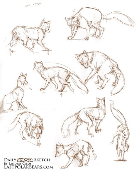 sketchbook how to draw line daily animal sketch foxes in motion the last of the