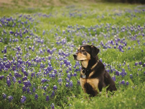 pet and photography for everybody secrets from a pro books springtime pet tips from the spca island weekly
