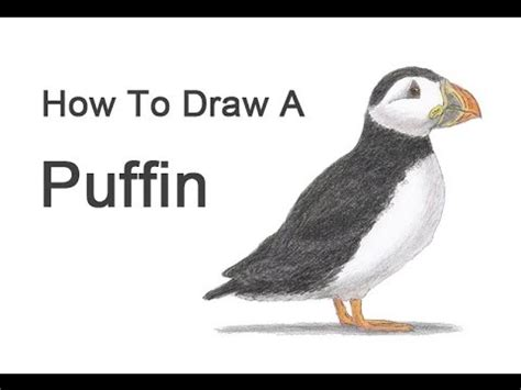 K 3d Pomerian Kid how to draw a goldfinch doovi