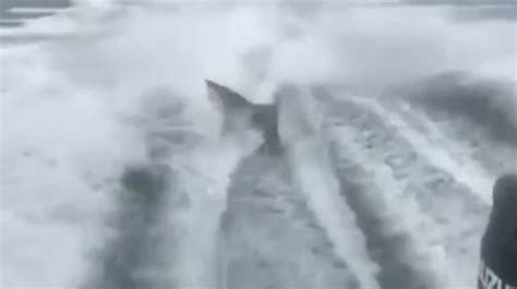 man dragged shark behind boat video of shark being dragged by boat prompts fwc
