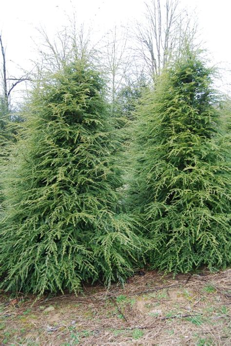 best tree to plant in backyard of the best trees for any backyard to plant ideas on pinterest gogo papa