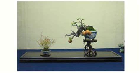 corso di cucina legnano corso di bonsai legnano mi giappone in italia