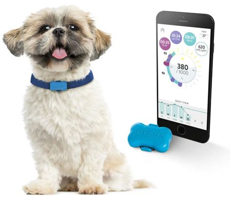 is for dogs fitbark is a fitbit for your