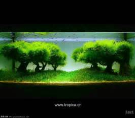Bamboo Aquascape 水草缸造景 小缸水草造景 水草缸造景经典图片 点力图库