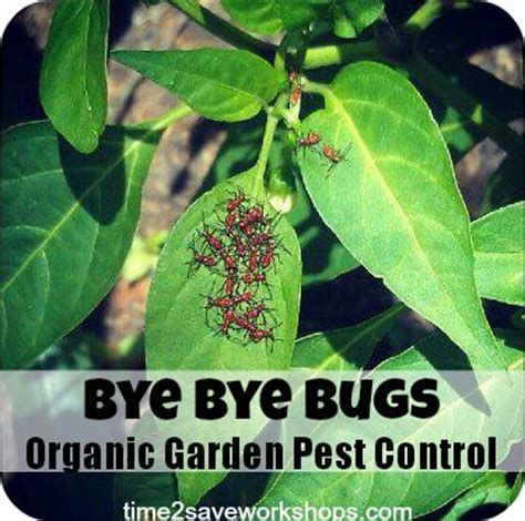 backyard pest control organic vegetable garden pest control in my garden