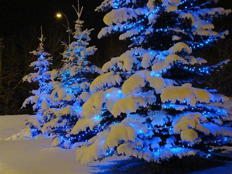 snow trees and blue on pinterest