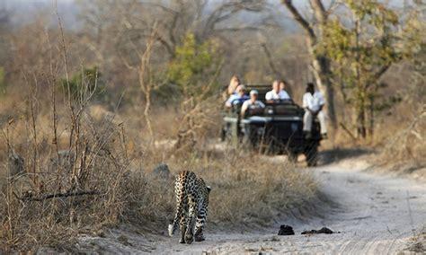 safari  south africa  airfare  cape town groupon