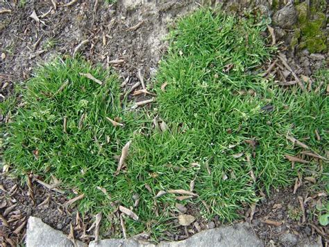 8 Cool Gardening Blogs by Weeds What S In Your Lawn Home Gardening