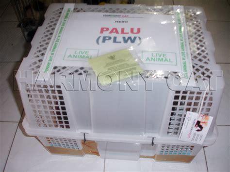 Keranjang Buat Kucing kargo dan ekspedisi pengiriman hewan pengiriman kucing