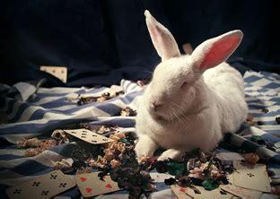 милый фото кроликов