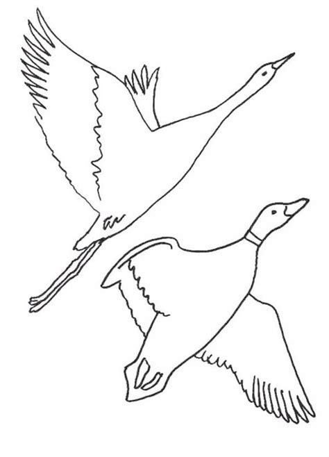 Migratory Birds Coloring Pages | coloring pages for kids learn to color birds how to
