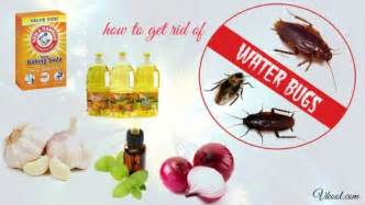 14 solutions how to get rid of water bugs naturally fast