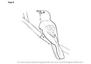 How To Draw A Blueprint Learn How To Draw A Asian Koel Birds Step By Step