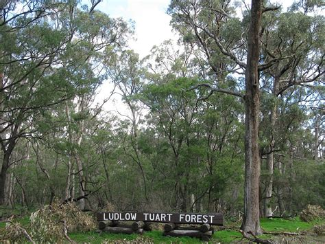 tuart forest national park wikipedia
