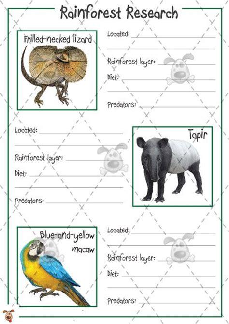 s pet rainforest animal research colour