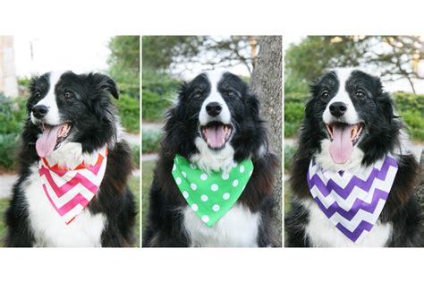 puppy bandanas pretty fluffy